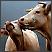 Životinjski parovi