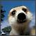 Merkati - životinje koje uzrokuju osmijeh