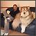 Veliki psi