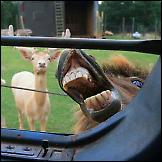 Konji fotobombe