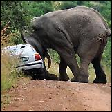 Passat vs slon