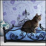 Luksuzni hotel za mačke