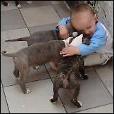 Zašto su djeci potrebni kućni ljubimci
