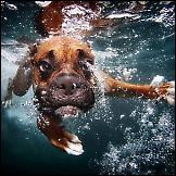 Psi pod vodom