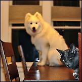 Foto bombe - životinje