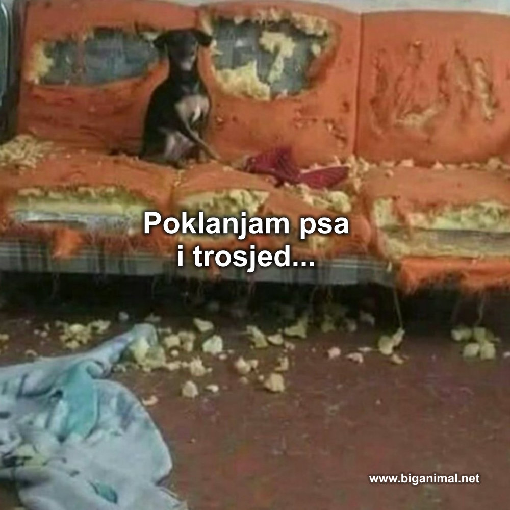 Poklanjam psa i trosjed