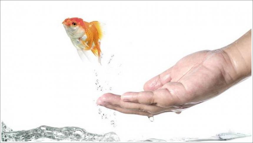 Pop i zlatna ribica