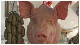 Svinjska glava