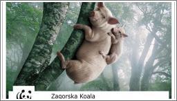 Spasimo Zagorske Koale